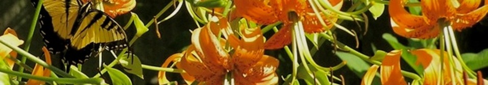 Extension Master Gardeners of Buncombe County