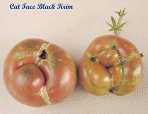 Cat Faced Tomatoes