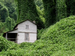 Mountain Home In Kudzu Forest