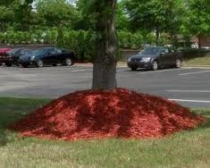 Mulch volcanos can damage tree trunks and cause improper root growth.