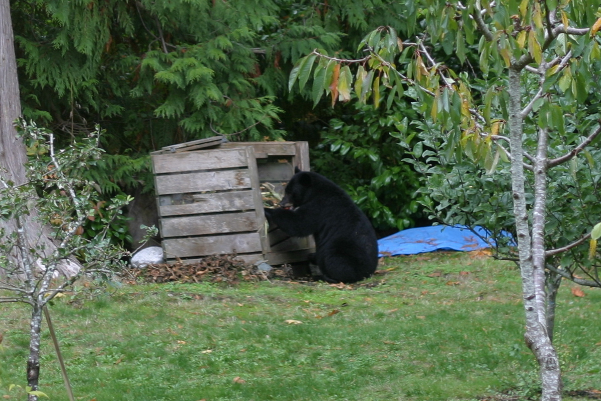 tips for keeping wildlife out of the garden. Black Bedroom Furniture Sets. Home Design Ideas