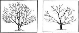 Fine Pruning