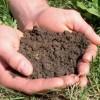 Soil-image-300x206-100x100