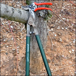 Pruning - Understanding the Basics