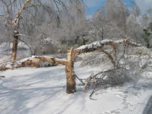 Ice_Damage