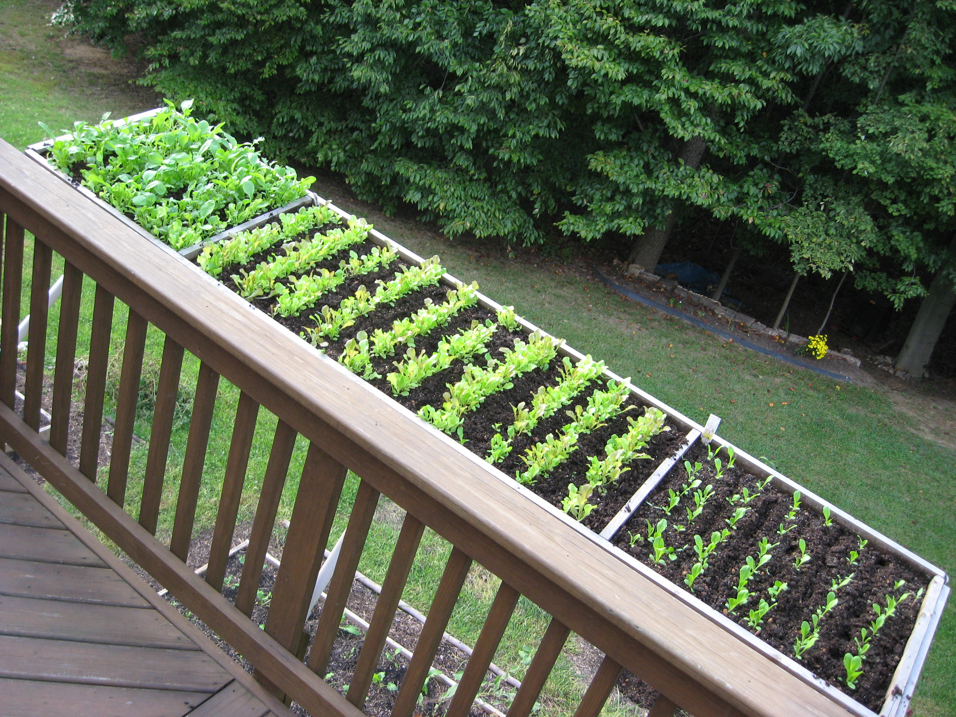 Archives for april 2015 extension master gardener for Images of garden decking