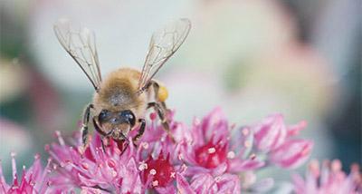 http://www.buncombemastergardener.org/wp-content/uploads/2015/04/bee-flower.jpg
