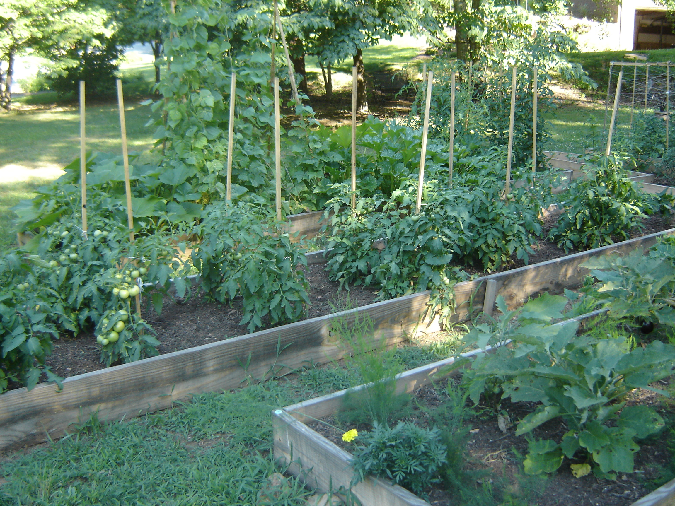 Vegetable Gardening Ipm Pest Management