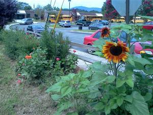 Vance Peace Garden