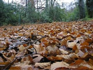 Leaves that need to be raked and bagged? Or a good insulating blanket for wintering pollinators?