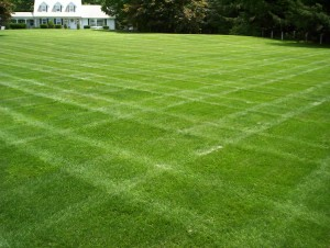 Mower treads may damage lawn over time.