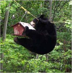 BearAfterBirdFeeder