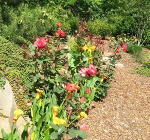 Roses_EMGJimSleevaGarden_2012