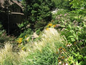 Diverse planting and access paths on steep slope garden.