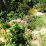 Steep slope meadow garden in full sun