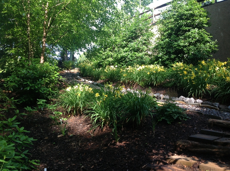 Gardening On Slopes Use Plants To Solve Problems