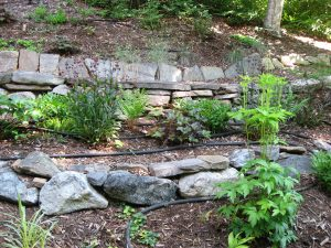 Steep slope gardening: irrigation with soaker hose system