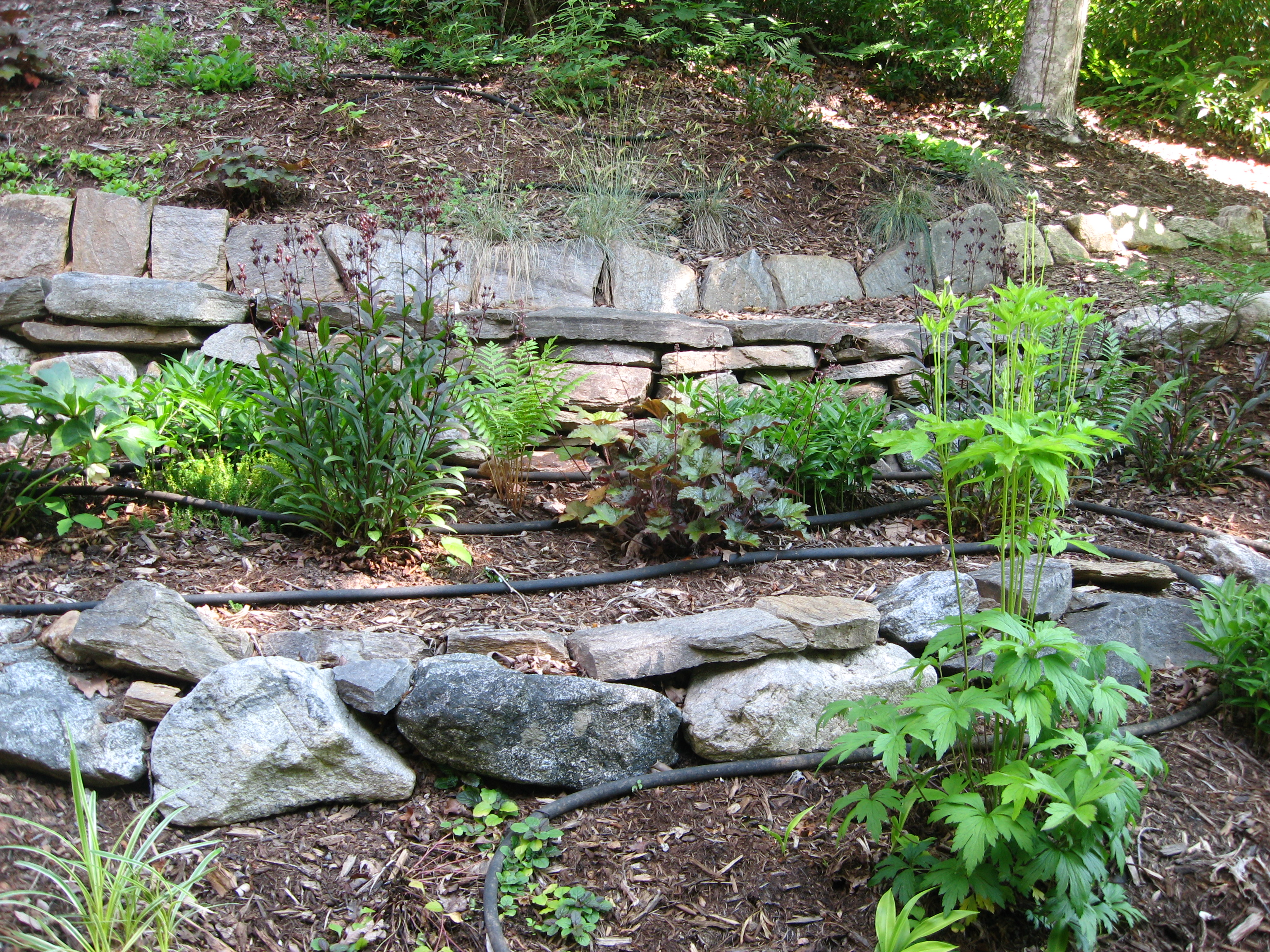 Archives for september 2016 extension master gardener for Garden designs for slopes