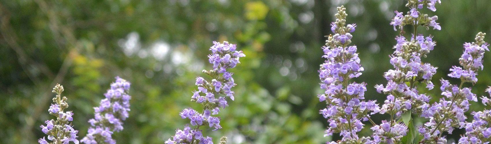 Header Small Purple Flowers Compressor Extension Master Gardener