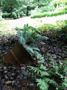 Kosma Garden-Wild preserve for peaceful contemplation