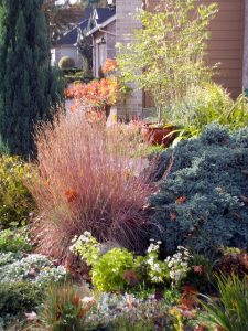 Little Bluestem (Schizachyrium scoparium)_Autumn Light_jacki-dee_CC BY-NC-ND 2.0_Flickr