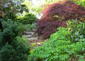 Harter Garden - Focus on native trees and Asian maples