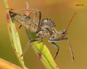 Wheel Bug_John Flannery_CC BY-SA 2.0_Flickr