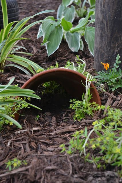 Buried Clay Pot Makes Good Toad House