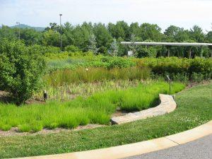 Rain garden at N.C. Arboretum, Asheville