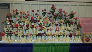 Rose Society display 2016