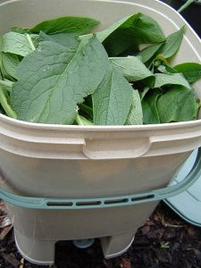 Bokashi bucket with comfrey_Fluffymuppet_CC BY-NC-ND 2.0_Flickr
