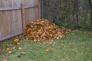 Pile of Leaves_Compost_Jeremy Noble_CC BY 2.0_Flickr