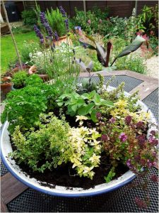 Herb Garden in Container_by Frances Carter_CC_Flickr