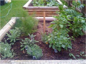Herb Garden in Raised Beds_by Kyla Kae_CC_Flickr