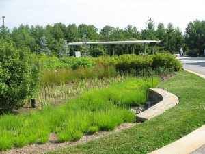 Rain garden at The North Carolina Arboretum in Asheville features a variety of plants and is an example of construction best practices.