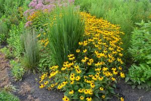 Rain garden in Rosemont PA_Montgomery County Planning Commission_CC BY-SA 2.0_Flickr