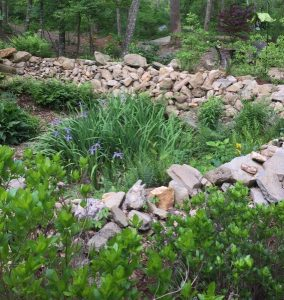 Rain garden protects nearby creek from runoff_MDurham