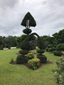 Topiary at Pearl Fryar Topiary Garden, Bishopville, SC