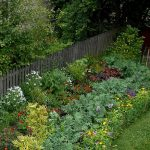 Backyard Kale in the flower garden_George Wesley & Bonita Dennells_CC BY-NC-ND 2.0_Flickr
