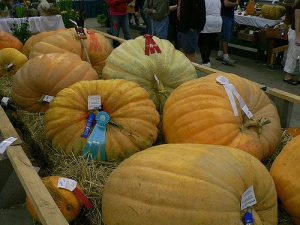 GIant Pumpkins_Michael Maggard_CC BY-NC-ND 2.0_Flickr