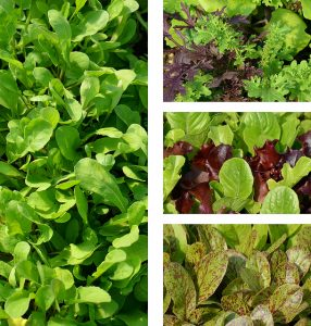 Greens_Billtacular_CC BY-NC-ND 2.0_Flickr