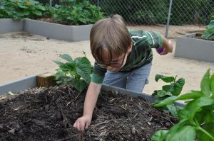 Growing Vegetables at Childcare Centers_photo by NC State Extension