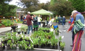 Plant sale, by the Asheville Blue Ridge Rose Society and Extension Master Gardener volunteers.