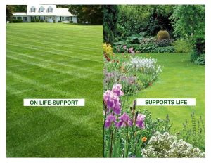 Reduce high maintenance lawns and replace with pollinator-friendly borders