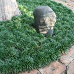 Dwarf mondo grass_Gardening Solutions_CC BY-NC 2.0_Flickr
