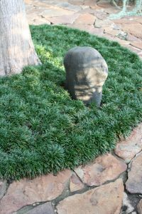 Dwarf mondo grass_Gardening Solutions_CC BY-NC 2.0_Flickr