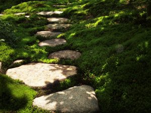 Stepping stones through moss garden_tanakawho_CC BY NC 2.0_Flickr