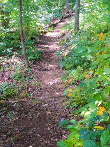 Wooded-Path-James-Wade