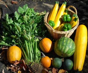 Fall Harvest_Melissa Robertson_CC BY-NC-ND 2.0_Flickr