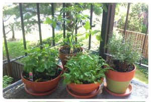 Container Garden_by Alyson Hurt_CC BY-NC 2.0